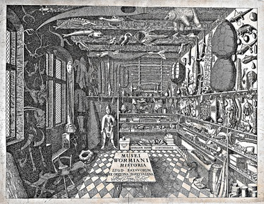 """Musei Wormiani Historia"", the frontispiece from the Museum Wormianum depicting Ole Worm's cabinet of curiosities"