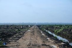 Deforestation in Riau, Sumatra, to make way for an oil palm plantation