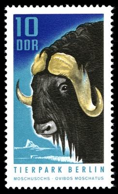 Немецкая марка с овцебыком, 1970 год
