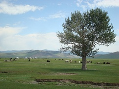 Pasture land in Arkhangai Province. Mongolia was the heartland of many nomadic empires.