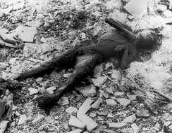 Partially incinerated child in Nagasaki. Photo from Japanese photographer Yōsuke Yamahata, one day after the blast and building fires had subsided. Once the American forces had Japan under their military control, they imposed censorship on all such images including those from the conventional bombing of Tokyo; this prevented the distribution of Yamahata's photographs. These restrictions were lifted in 1952.[222][223]