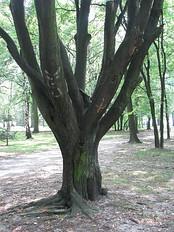 Park Zachodni we Wrocławiu 13.jpg
