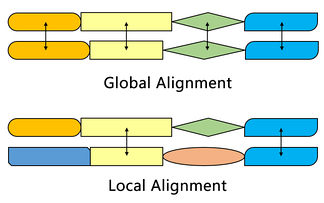Global and local sequence alignment