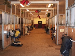 Horse stable interior