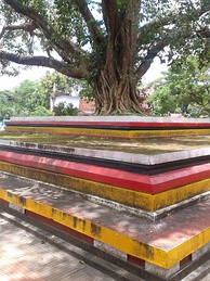 The Arayal Thara in front of Tiruvarkad Bhagavathy Temple (Madayi Kavu). Arayal in Malayalam is synonymous to Bodhi Tree or Pippallam