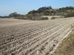 Chalk visible in ploughed soil at the foot of the Chiltern Hill escarpment near Shirburn on the Buckinghamshire/Oxfordshire border
