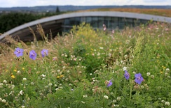 The Sky Garden Wildflower Roof topping the Kanes Salad Factory, Evesham.