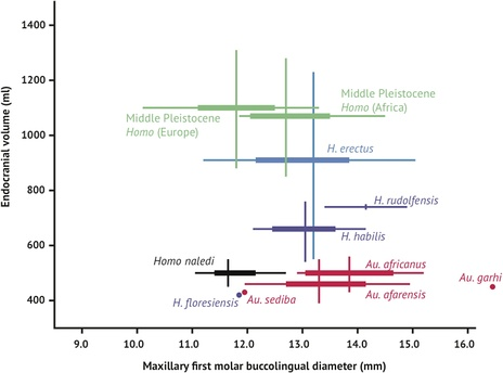 Brain size and tooth size in hominins.