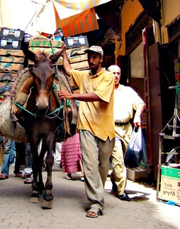 Mule moving goods around in the car-free Medina quarter, Fes, Morocco