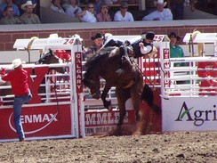 Rider at the Calgary Stampede rodeo, 2002