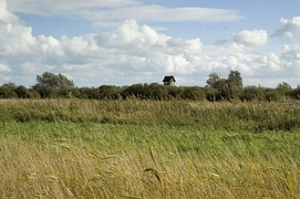 View of Wicken Fen showing vegetation typical of a fen in the foreground and carr vegetation featuring trees and bushes in the background