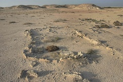 Excavation of a Kassite dye site on Al Khor Island