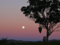 A full moon rising, seen through the Belt of Venus