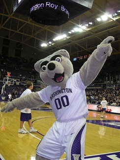 The costumed mascot, Harry the Husky, at a basketball game.