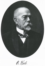 Robert Koch discovered the tuberculosis bacillus.