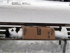 A street bench in Kitsilano, British Columbia, Canada with a snowman depicting a homeless person