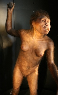 Reconstruction of Homo georgicus based on D2700, by Élisabeth Daynès, Museo de la Evolución Humana, Burgos, Spain.