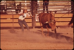 Junior Rodeo on the Colorado River Indian Reservation, 1972