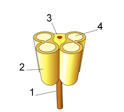 Schematic of anther ( 1: Filament 2: Theca 3: Connective 4: Pollen sac or Microsporangium)
