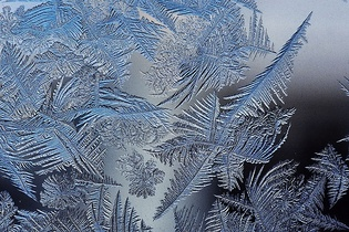 Frost crystals occurring naturally on cold glass form fractal patterns