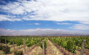 Vineyards in Uco Valley