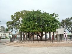 Тамаринд, посаженный на месте основания города Санта-Клара на Кубе