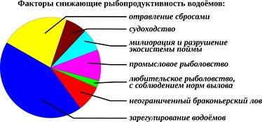 Примерно ~80% убыли рыб приходятся на негативные антропогенные факторы[68][69], основными из которых являются: препятствия нересту на заливной пойме (эффективность которого в ~50 раз превышает эффективность нереста в русле) и падение уровня в речных системах, а так же загрязнения водоёмов бытовыми и промышленными сбросами и т.д.. Оставшиеся ~20%[70] приходятся на вылов человеком, включая как промысел и любительское рыболовство так и браконьерство.