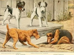 Some Terrier breeds. The book of dogs; an intimate study of mankind's best friend, 1919.