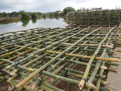 Bamboo is used for mussels breeding and propagation (Abucay, Bataan, Philippines).