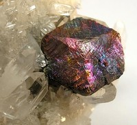 A specimen consisting of a bornite-coated chalcopyrite crystal nestled in a bed of clear quartz crystals and lustrous pyrite crystals. The bornite-coated crystal is up to 1.5 cm across.
