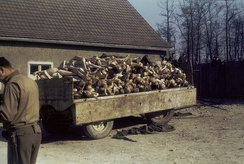 A wagon piled high with corpses outside the crematorium in the Buchenwald concentration camp liberated by the U.S. Army, 1945