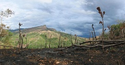 Scorched land resulting from slash-and-burn agriculture
