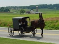 An Amish family in a horse-drawn square buggy.
