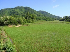 One of the many rice fields in Hainan