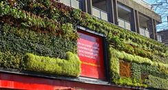 The Green Wall on Sutton High St