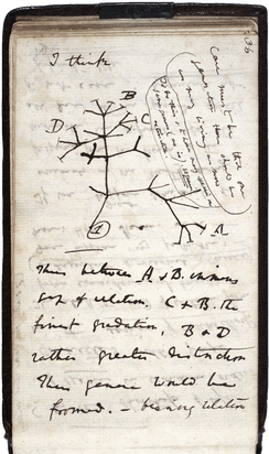 A page of hand-written notes, with a sketch of branching lines.