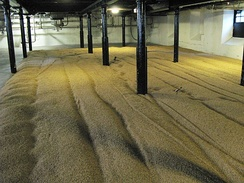 Traditional floor malting at Highland Park Distillery in Scotland