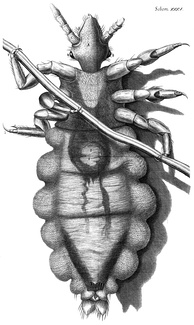 Engraving of a louse from Hooke's Micrographia