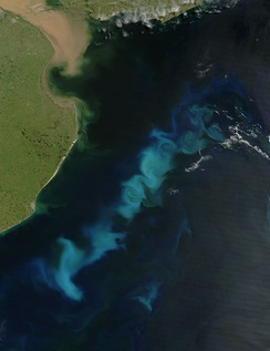 An oceanic phytoplankton bloom in the South Atlantic Ocean, off the coast of Argentina. The aim of ocean iron fertilization in theory is to increase such blooms by adding some iron, which would then draw carbon from the atmosphere and fix it on the seabed.