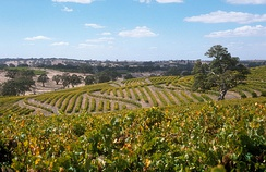 Vineyard in Eden Valley. South Australia's wine industry is the largest in Australia.[21]