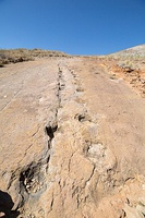 Dinosaur footprints from Torotoro National Park in Bolivia.