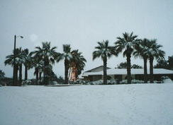 2004 Christmas Eve Snowstorm in South Texas