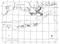 Chemosynthetic communities in the northern part of Gulf of Mexico around cold seeps known in 2000