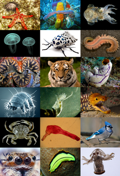 An example of the many animal species on the Earth