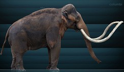 Restoration of a Columbian Mammoth