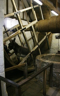 A donkey operating the well