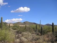 The Arizona-Sonora Desert, looking back towards the museum entrance