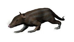 Restoration of Juramaia sinensis, the oldest known Eutherian (160 M.Y.A.)[37]