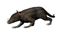 Restoration of Juramaia sinensis, the oldest known Eutherian (160 mya)[35]