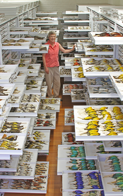 A collection of bird specimens at the Museum of Comparative Zoology